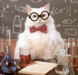 wpid-experiment-cat-scientist